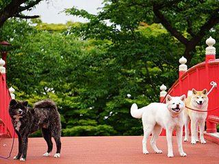 秋田犬会館 会場写真 - 1