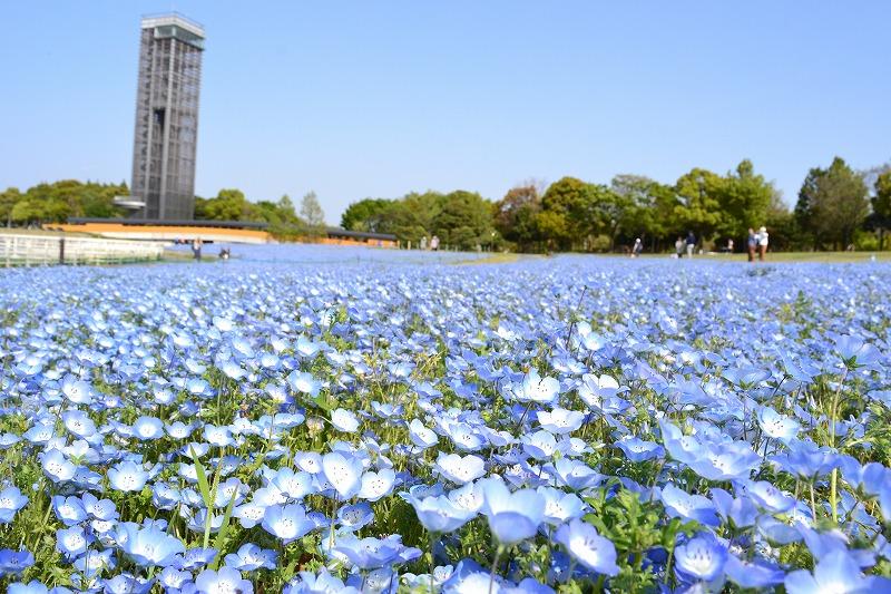 浜名湖ガーデンパーク 会場写真 - 1