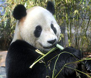 上野動物園 会場写真 - 1